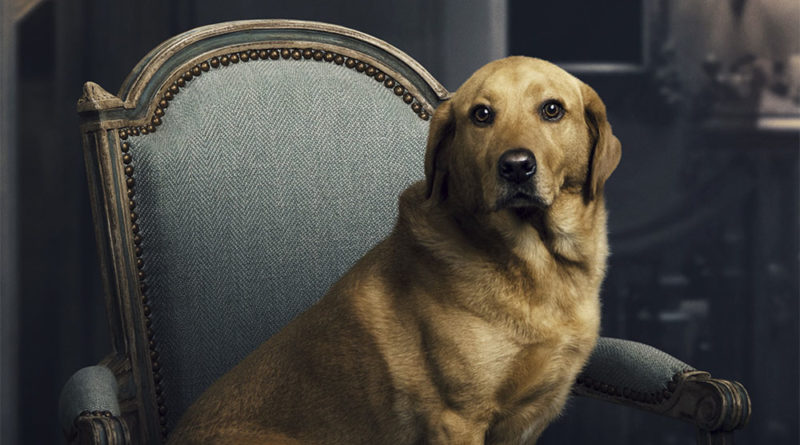 A day in the life of 'Downton Abbey' movie's adorable dog